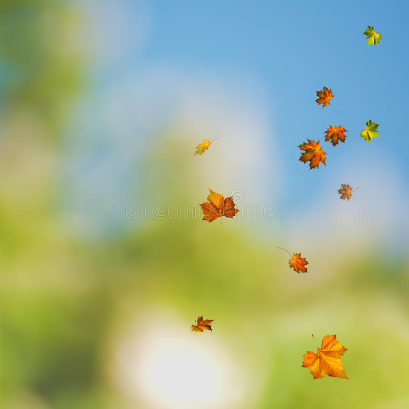 Schönheitsfarben des Herbstes lizenzfreie stockfotografie
