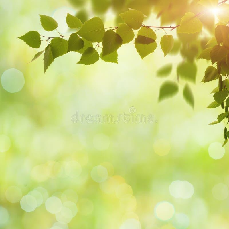 Schönheitsfrühlings- und -sommerhintergründe lizenzfreies stockfoto