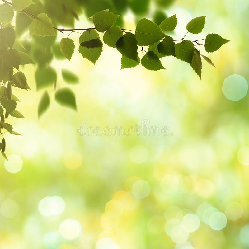 Schönheitsfrühlings- und -sommerhintergründe stockbild