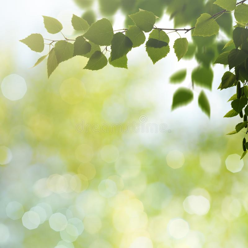 Schönheitsfrühlings- und -sommerhintergründe stockfotos
