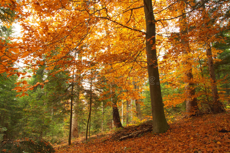 Schönheitslandschaftsherbst-Waldansicht lizenzfreie stockbilder