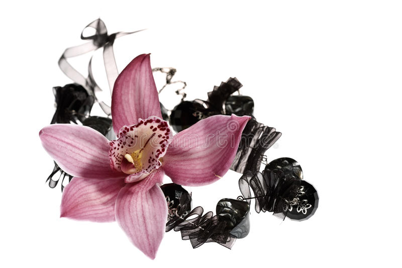 Schönheitsorchidee lizenzfreies stockbild