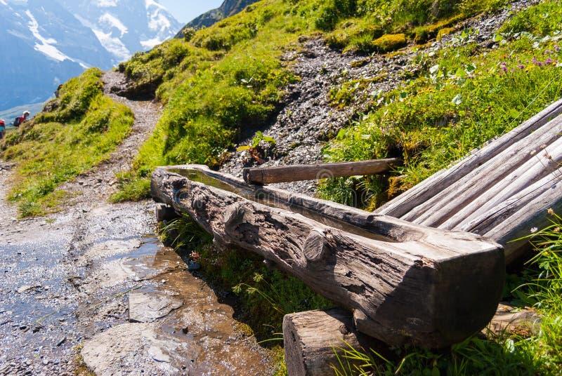 Schüchtern Sie die Tränke ein, die vom Holz im Hochgebirge von der Schweiz hergestellt wird lizenzfreie stockfotografie