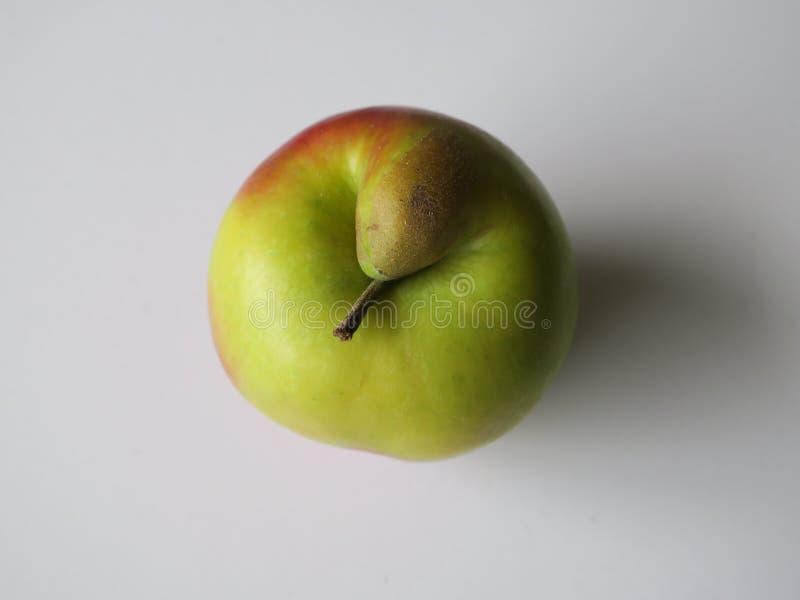 Sch?chterner roter und gr?ner Apfel mit einem waldigen Stiel lizenzfreie stockbilder