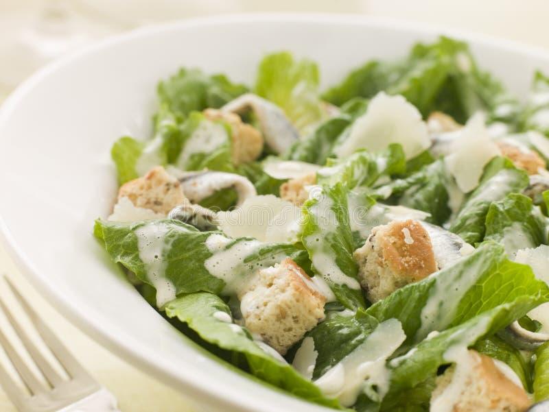 Schüssel Caesar-Salat lizenzfreie stockbilder