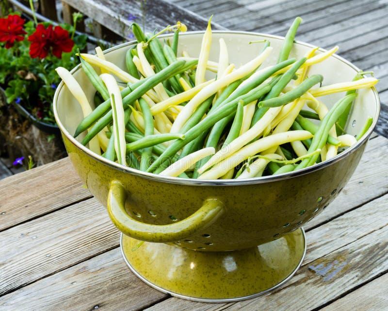 Schüssel frische ausgewählte gelbe und grüne Bohnen stockfotografie