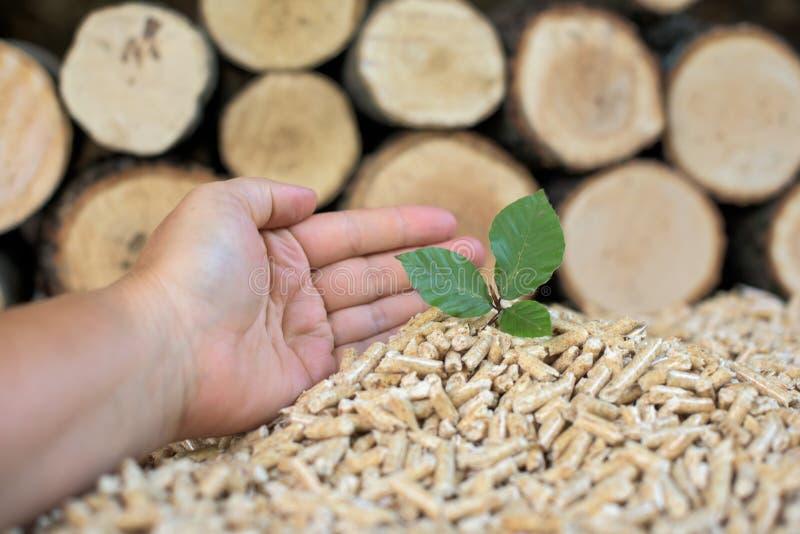 Schützen Sie die Bäume stockfoto