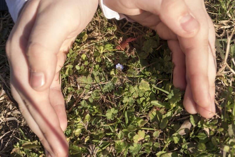 Schützende Blume des kleinen Mädchens lizenzfreie stockfotografie