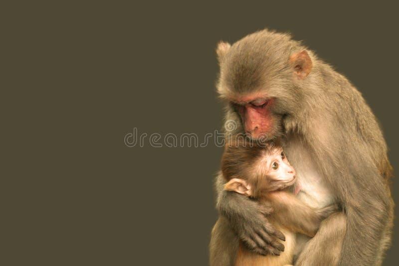 Schützende mitfühlende Mutterwild lebende tiere lizenzfreies stockfoto