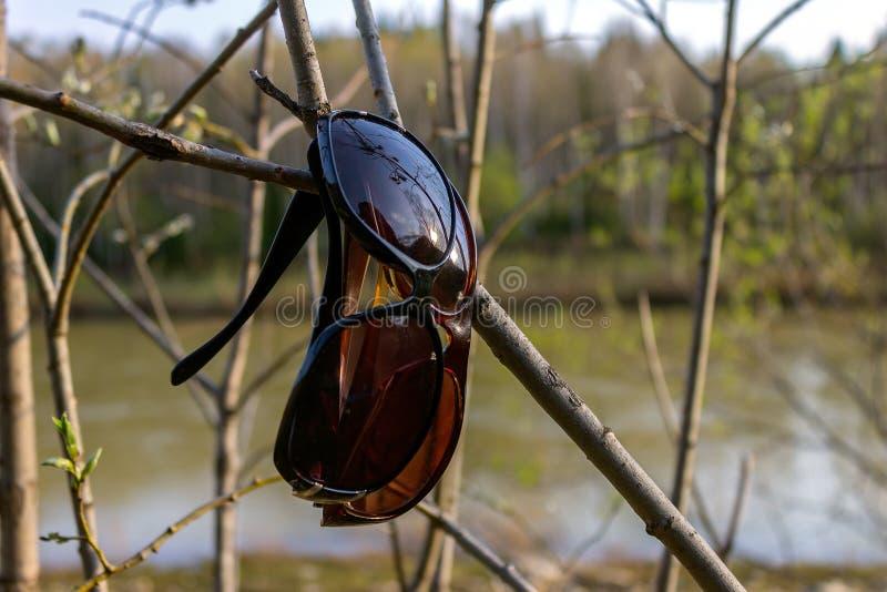 Schützende Sonnenbrillen auf einem Baumast gegen einen Fluss stockfoto