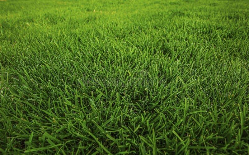Sch?ne Ansicht des Vorgartens des privaten Gartens Rasen des gr?nen Grases stockbilder