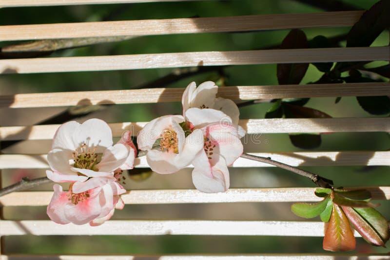 Sch?ne Blumen der Baumbl?te auf einem Hintergrund stockfotos