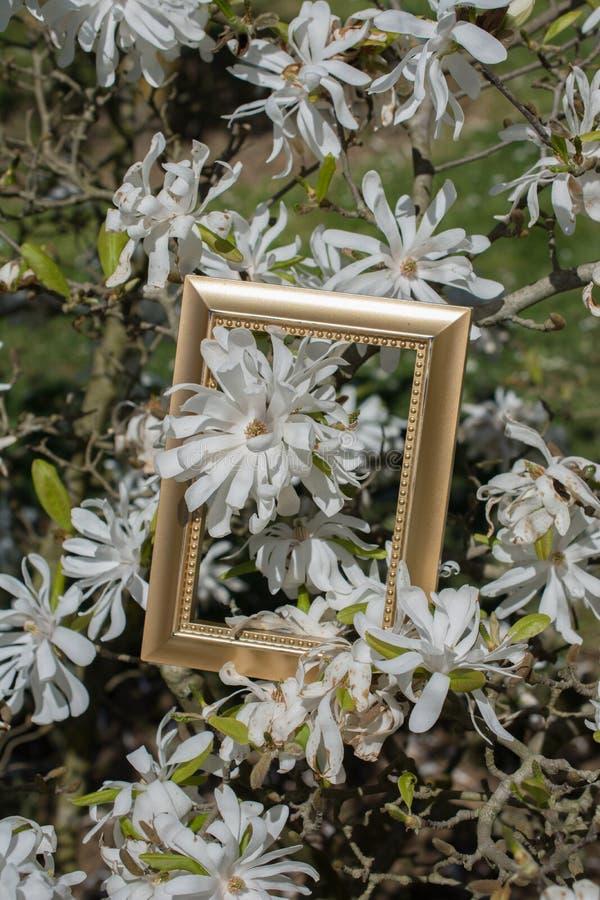 Sch?ne Blumen der Baumbl?ten-Bl?te in einem Rahmen lizenzfreie stockfotografie