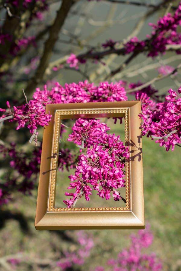 Sch?ne Blumen der Baumbl?ten-Bl?te in einem Rahmen lizenzfreies stockfoto