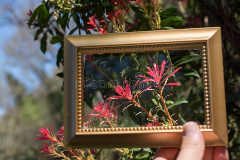 Sch?ne Blumen der Baumbl?ten-Bl?te in einem Rahmen lizenzfreies stockbild