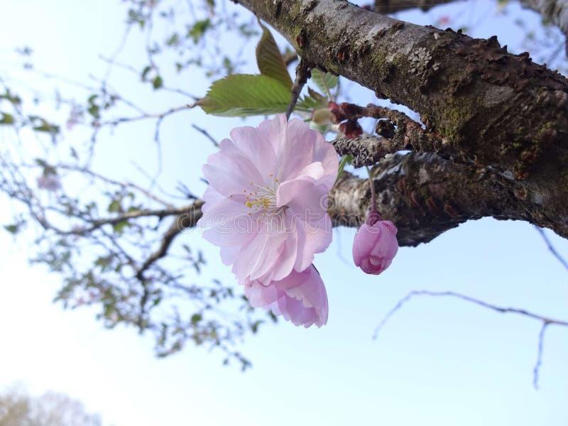 Sch?ne Blumen in der Sonne lizenzfreies stockfoto
