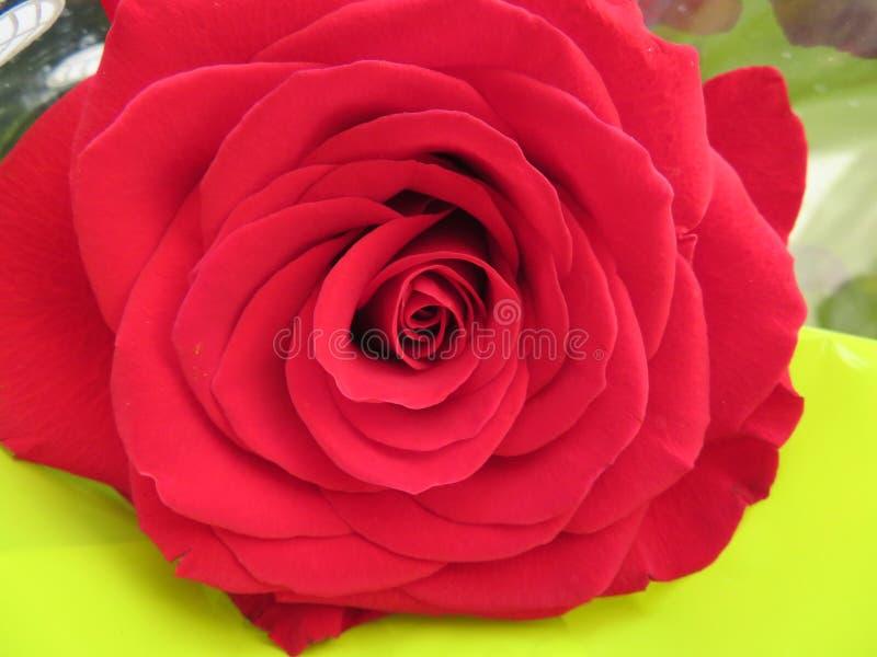 Sch?ne Blumen von intensiven Farben und der gro?en Sch?nheit lizenzfreie stockbilder
