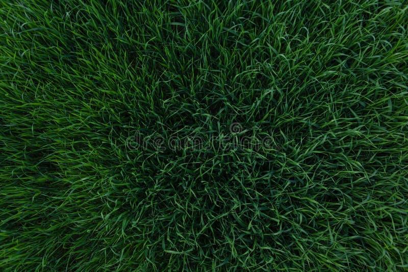 Sch?ne Hintergrundbeschaffenheit des gr?nen Grases Rasengestaltungselement Ansicht von oben stockfoto