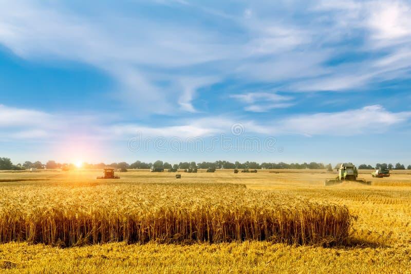 Sch?ne Landschaftlandschaft M?hdrescher auf einem Weizenfeld stockbild