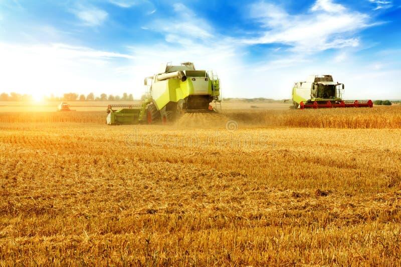 Sch?ne Landschaftlandschaft M?hdrescher auf einem Weizenfeld stockbilder