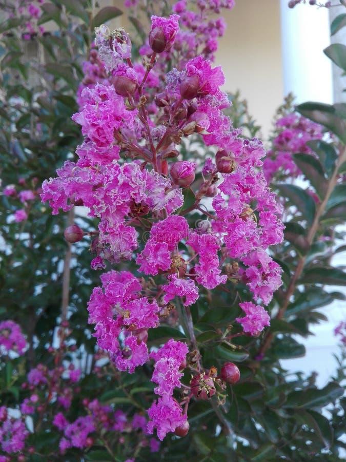 Sch?ne rosafarbene Blume stockbilder