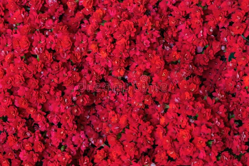 Sch?ne rote Blumen Hintergrund mit roten dekorativen Blumen Datei schlie?t ENV-Format ein lizenzfreie stockfotografie