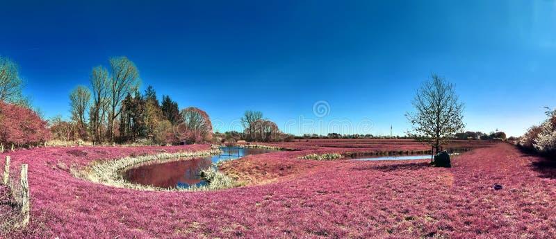 Sch?ne und bunte Fantasielandschaft in einer asiatischen purpurroten Infrarotfotoart lizenzfreie stockfotografie