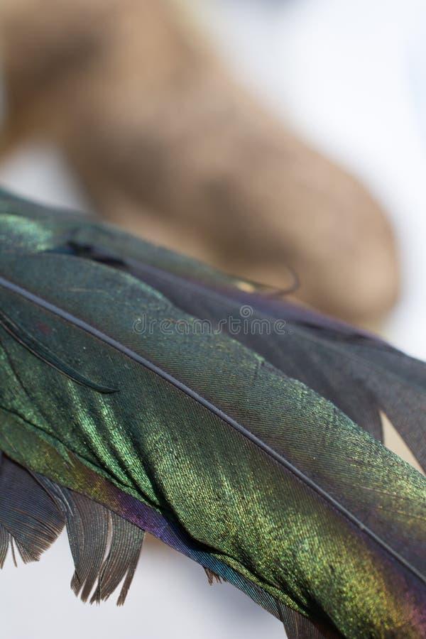 Sch?ne Vogelfedern f?r dekorative Ziele stockbild