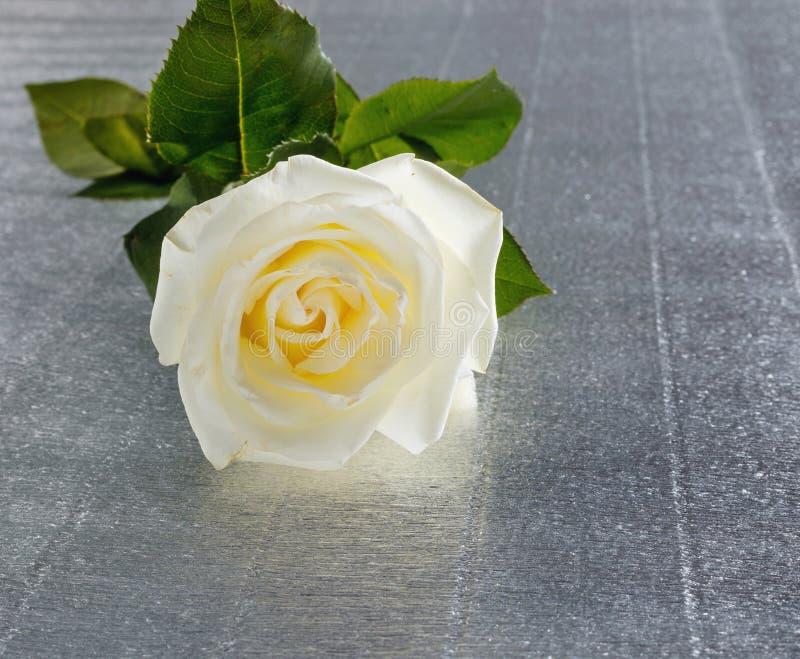Sch?ne wei?e Rose f?r Valentinstag oder Hochzeit auf Tabelle lizenzfreie stockbilder