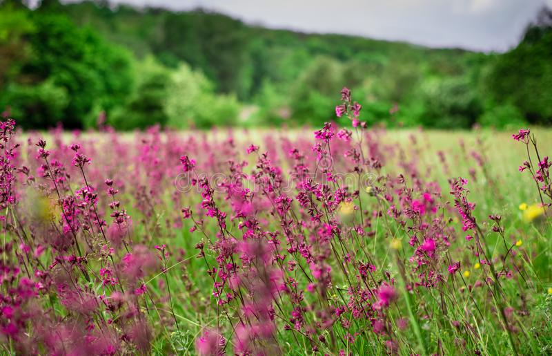 Sch?ne Wildflowers im traditionellen ukrainischen Bauerndorf lizenzfreie stockfotos
