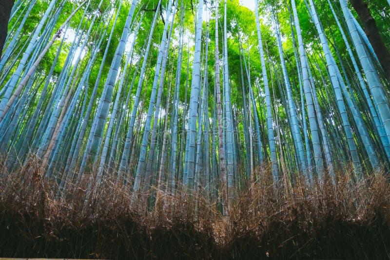 Sch?ner Bambuswald bei Arashiyama, Kyoto, Japan lizenzfreies stockbild