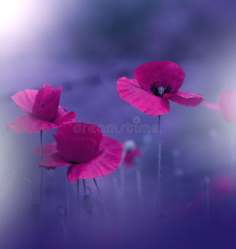 Sch?ner blauer Natur-Hintergrund K?nstlerische Tapete Art Macro Photography Kreatives erstaunliches Blumenfoto Rote Mohnblumeblum lizenzfreie stockfotos