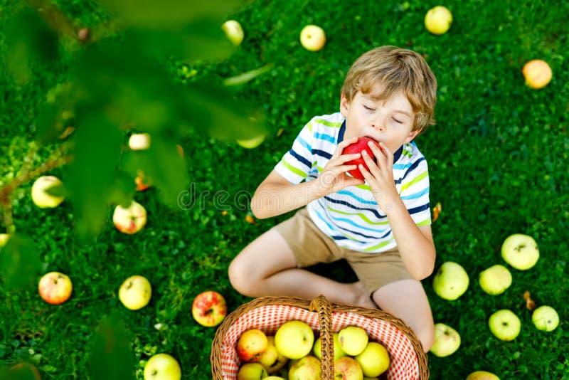 Sch?ner blonder gl?cklicher Kinderjunge, der drau?en rote ?pfel auf Biohof, Herbst ausw?hlt und isst Lustige kleine Vorschule stockbild