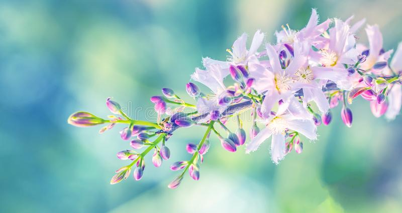 Sch?ner Blumenfr?hlingszusammenfassungshintergrund der Natur stockbild