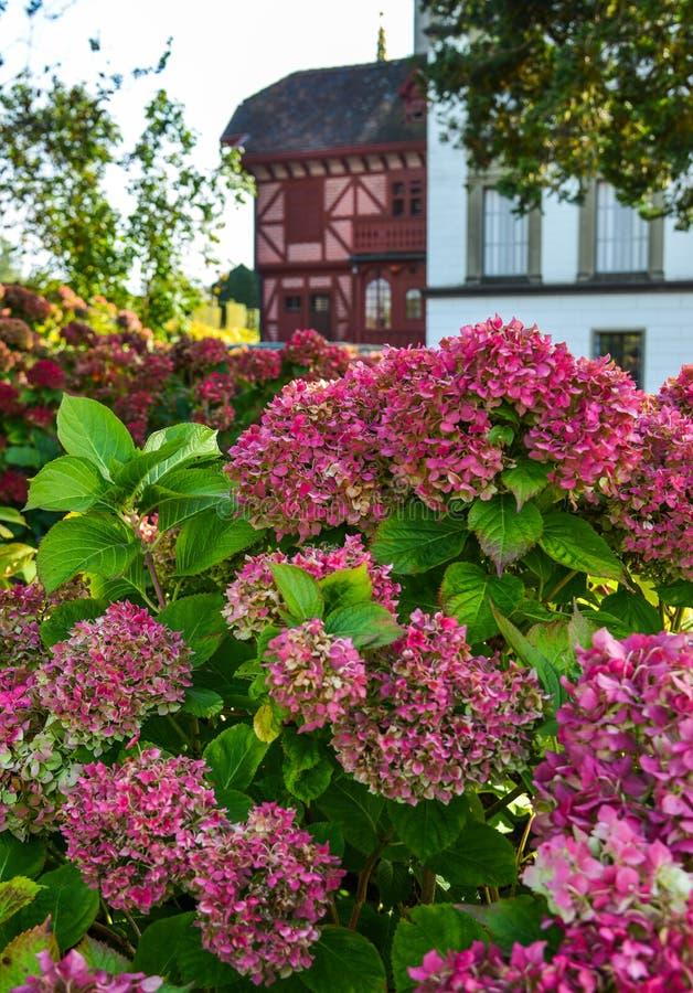Sch?ner Busch von Hortensieblumen lizenzfreies stockbild