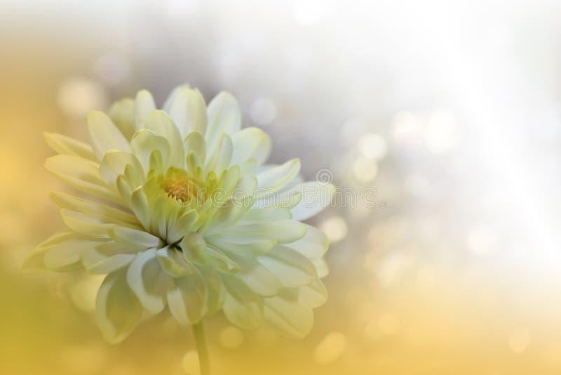 Sch?ner Naturhintergrund Abstrakte k?nstlerische Tapete Art Macro Photography ?berraschendes Blumenfoto Gelbe Chrysanthemeblume stockfoto