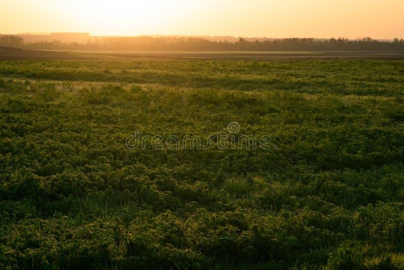 Sch?ner Sonnenuntergang auf einem Fr?hlingsfeld stockfotos