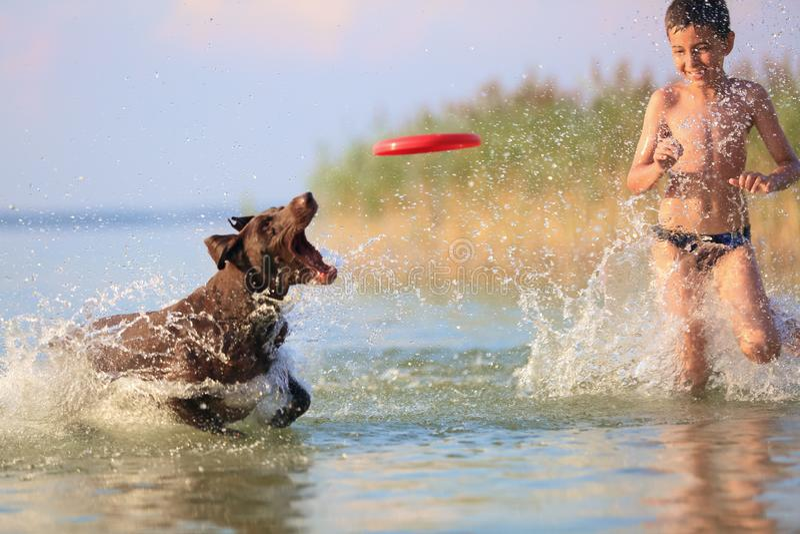 Sch?ner sonniger Sommertag Ein Junge l?uft mit dem Hund im See und herum spritzt das Wasser Spielerische, gl?ckliche Kindheitsmom stockfotografie