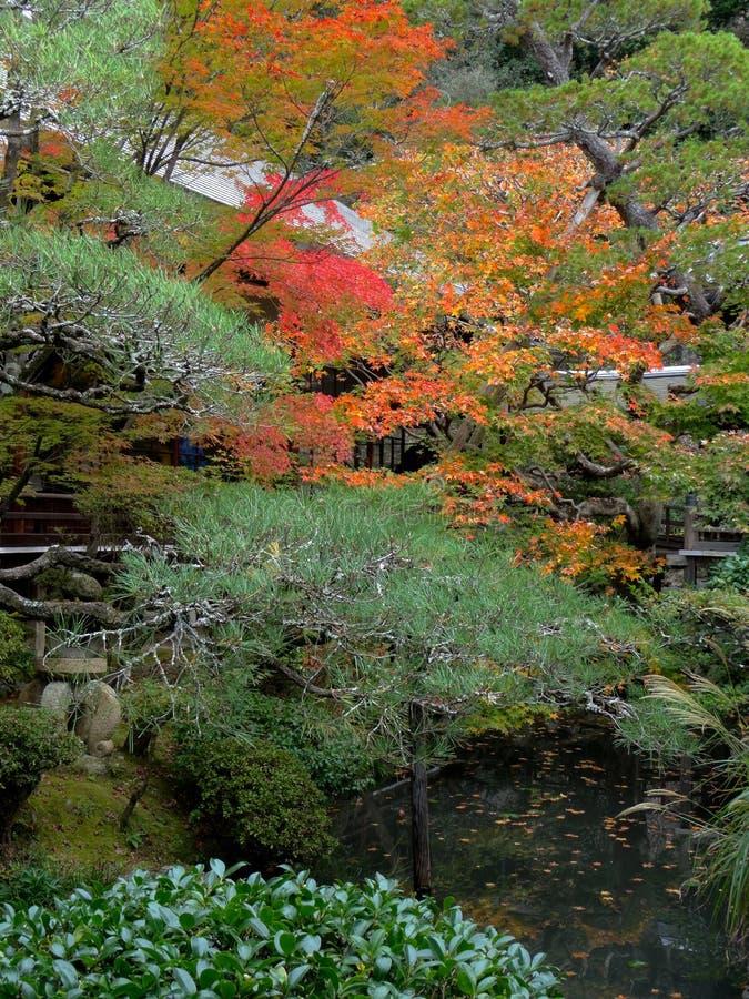 Sch?nes Herbstlaub von Ahornbl?ttern in Kyoto stockbild