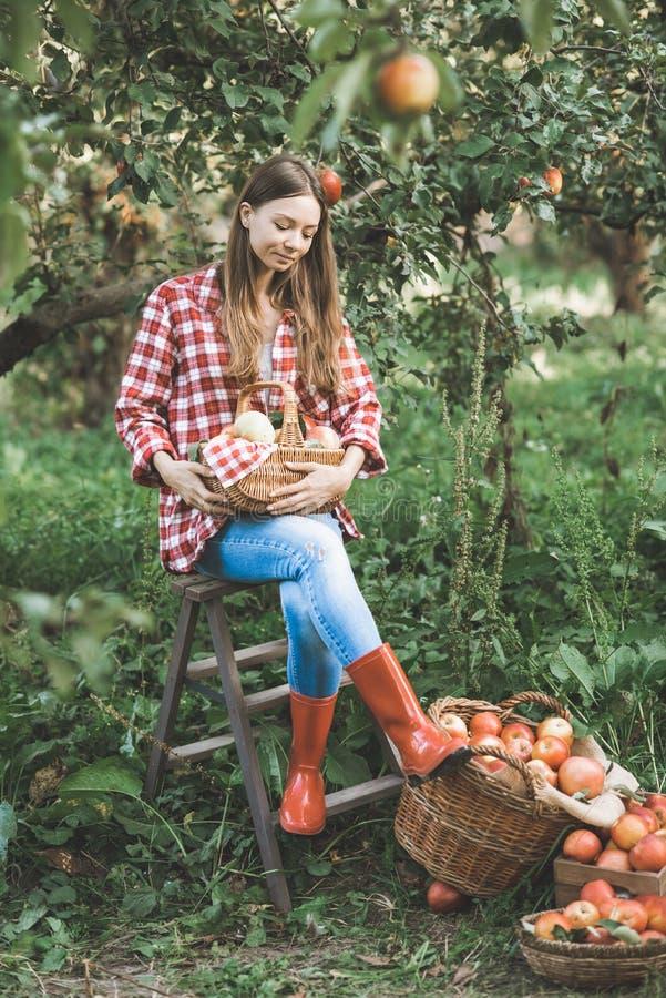 Sch?nes M?dchen, das reife organische ?pfel im Korb im Obstgarten oder auf Bauernhof am Falltag ausw?hlt stockfotos