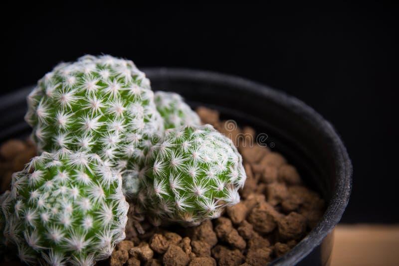 Sch?nes saftiges und Kaktus lizenzfreie stockbilder