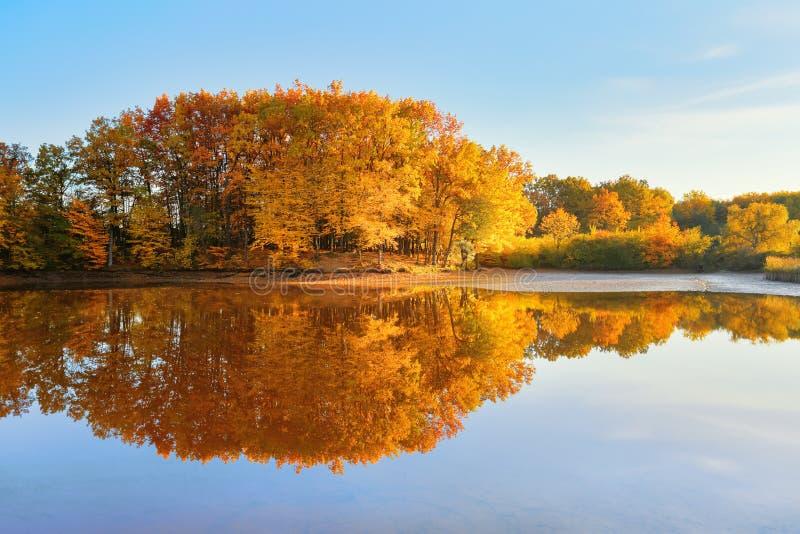 Sch?nes Scharlachrot, Gelb, Orangenb?ume an der Flussk?ste reflektieren sich im Wasser Unglaublicher sonniger Tag Majest?tischer  stockfotos