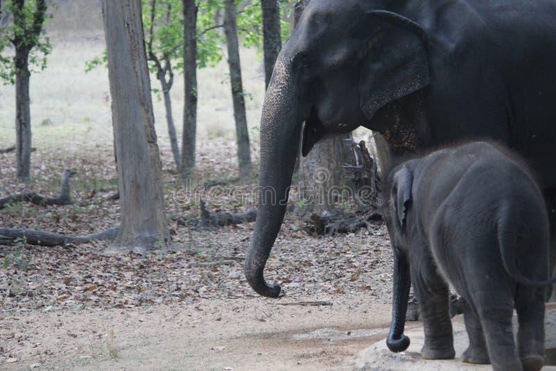 Sch?tzchen- und Mutterelefant lizenzfreie stockfotografie