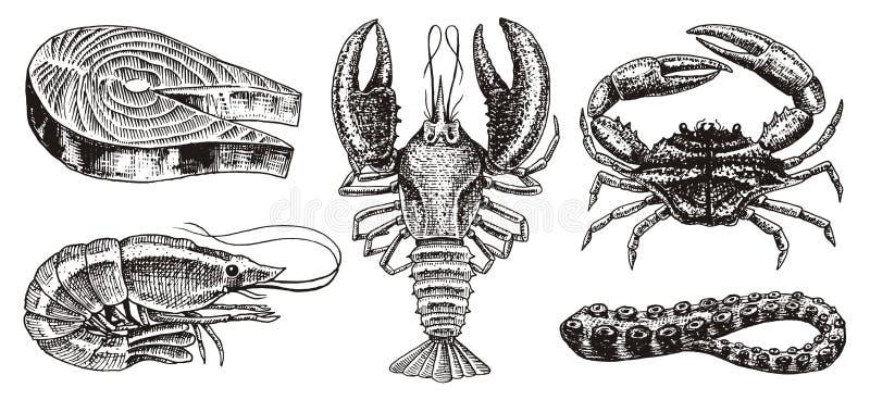 Schaaldieren, garnalen, zeekreeft of rivierkreeften, zalmlapje vlees, krab met klauwen Rivier en meer of overzeese schepselen zoe royalty-vrije illustratie