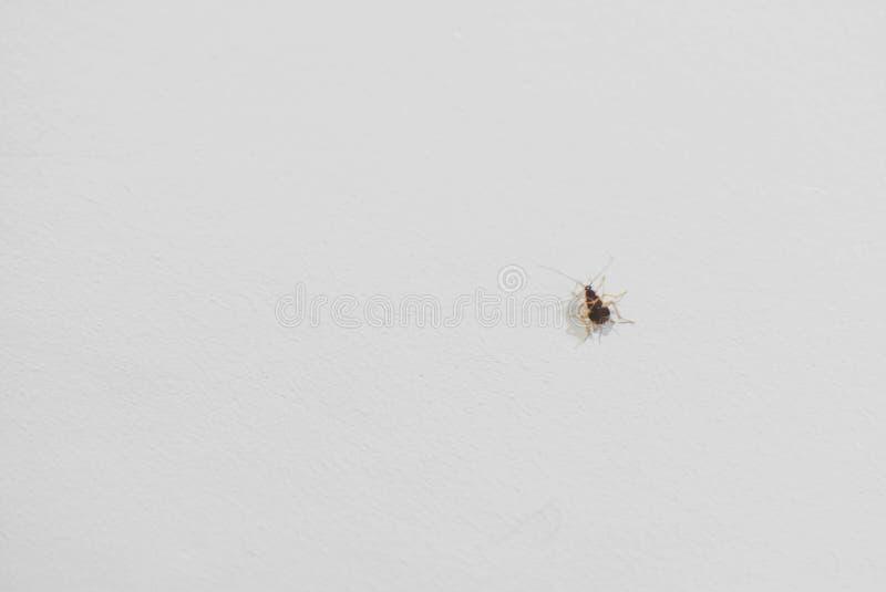 Schaben auf der weißen Wand stockbild