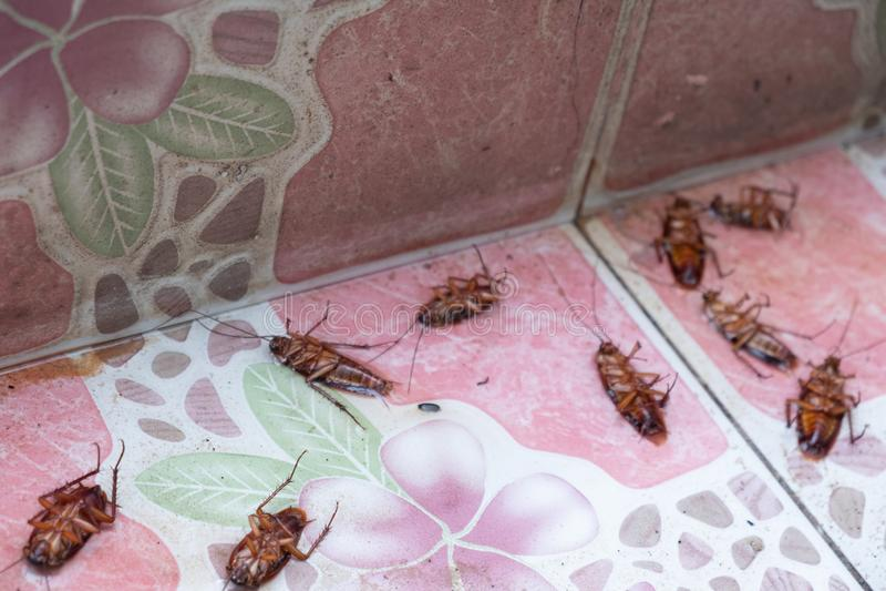 Schaben sterben wegen der Insektenvertilgungsmittel lizenzfreies stockbild
