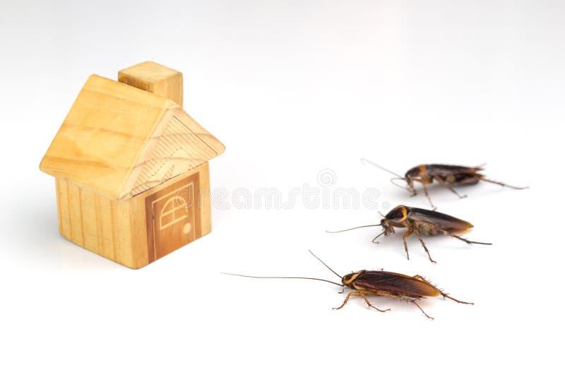 Schaben und Hausmodelle auf einem weißen Hintergrund lizenzfreie stockbilder