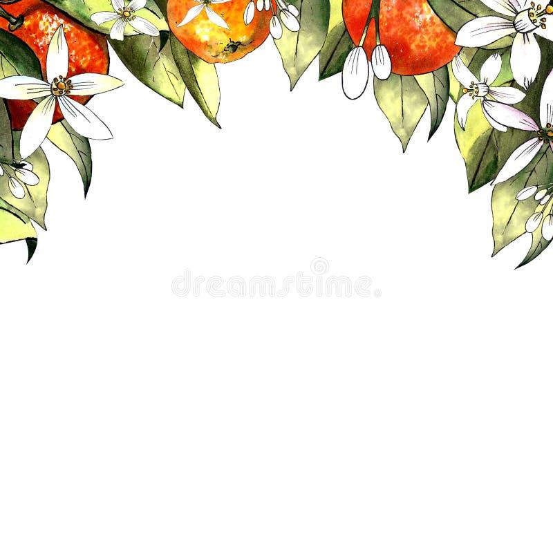 Schablone des Handabgehobenen betrages der Mandarine, der Blätter und der Blumen Zeichnungsmarkierungen stockbilder