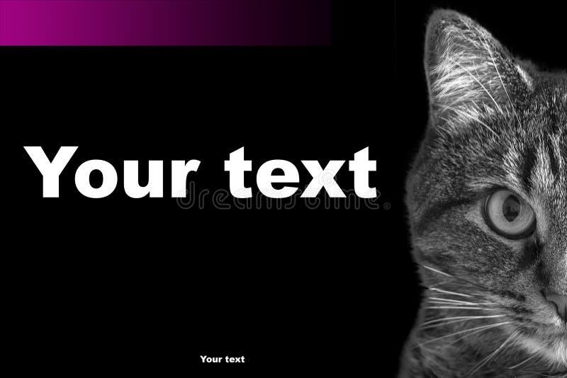 Schablonenbroschürenwerbung mit Fotos einer Katze auf einem dunklen Hintergrund und mit einem Aufkleber unter dem Text stockbild