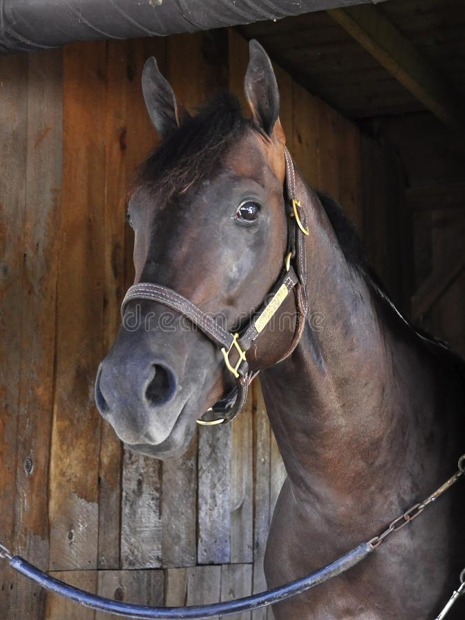 Schackningsperiod - hästtillflyktsort Saratoga arkivfoto
